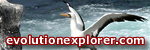 evolutionexplorer.com